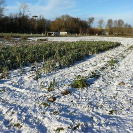 Winter Leeks, The Vegetable Patch - Ballymaloe Cookery School