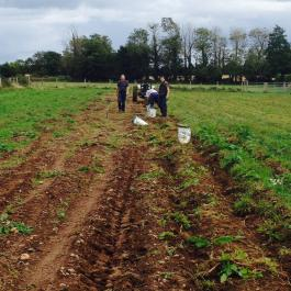 Potato-Picking, The Vegetable Patch - Ballymaloe Cookery School