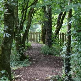 Pathway to The Kitchen Garden - Ballymaloe Cookery School