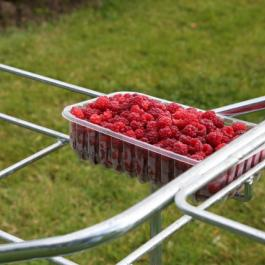 Picking Raspberries, The Soft Fruit Garden - Ballymaloe Cookery School