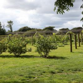 The Soft Fruit Garden - Ballymaloe Cookery School