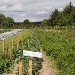 The Vegetable Patch - Ballymaloe Cookery School