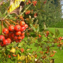 The Memory Arboretum - Ballymaloe Cookery School
