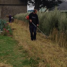 Harvesting The Wheat - Ballymaloe Cookery School