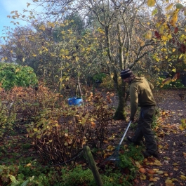 Aiden raking up leaves in The Ornamental Fruit Garden - Ballymaloe Cookery School