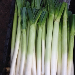 Our organic leeks from the Vegetable Field - Ballymaloe Cookery School