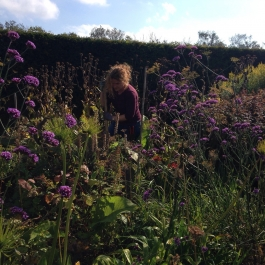 Gardener Sonya divides perennials in the herbaceous borders - Ballymaloe Cookery School