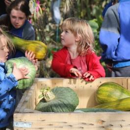 Pumpkin picking party - Ballymaloe Cookery School