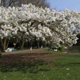Spring in The Old Pleasure Garden - Ballymaloe Cookery School