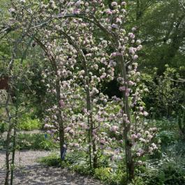 Trellis - Ornamental Fruit Garden - Ballymaloe Cookery School