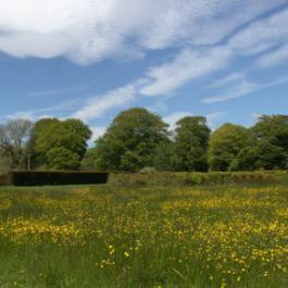 The Wildflower Meadow - Ballymaloe Cookery School