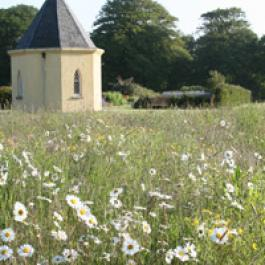 Wildflower Meadow - Ballymaloe Cookery School