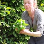 Alison Henderson foraging at Colstoun Estate